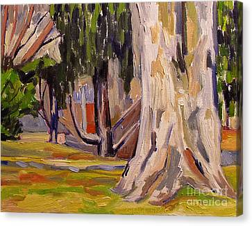 Artistic License Canvas Print - Sycamore At Millstone by Charlie Spear
