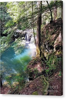 Sycamore Falls Canvas Print