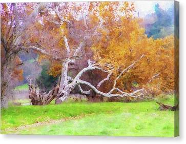 Sycamore Grove 1 Canvas Print by Terry Davis