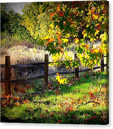 Sycamore Grove Series 11 Canvas Print by Carol Groenen