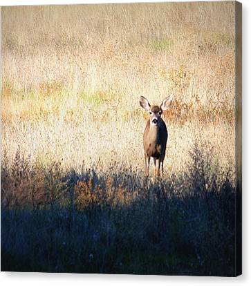Sycamore Grove Series 2 Canvas Print by Carol Groenen