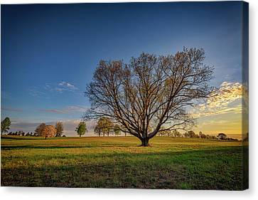 Sycamore In Valley Forge Canvas Print by Rick Berk