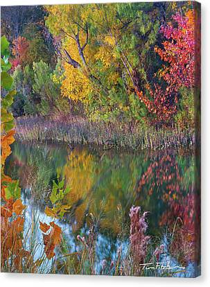 Sycamores And Willows Canvas Print
