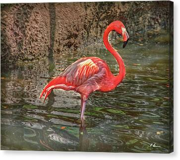 Canvas Print featuring the photograph Symbol Of Florida by Hanny Heim