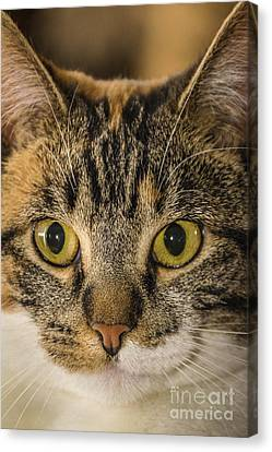 Symmetrical Cat Canvas Print