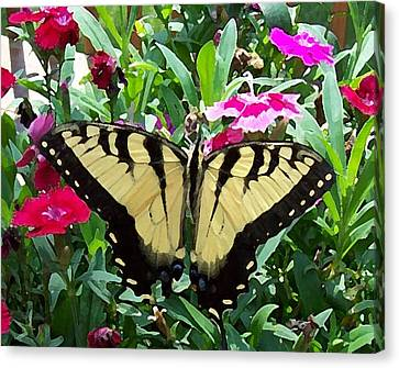 Canvas Print featuring the photograph Symmetry by Sandi OReilly