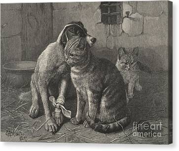 Doggy Cards Canvas Print - Sympathy  by English School