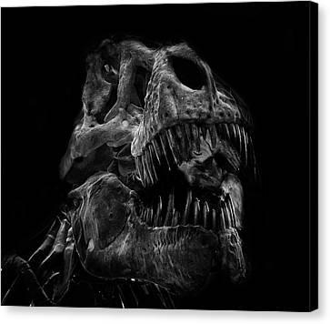 T-rex Canvas Print - T Rex Skull by Martin Newman