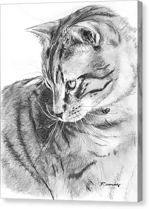Tabby Cat In Profile Drawing Canvas Print