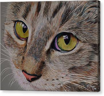 Tabby Stare Canvas Print by Don MacCarthy