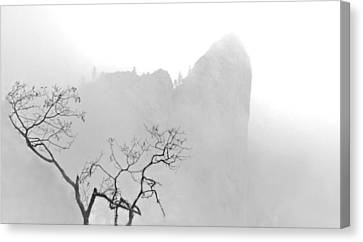 Taft Point In Mist Canvas Print