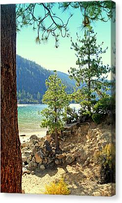Tahoe Pines Canvas Print by Lynn Bawden