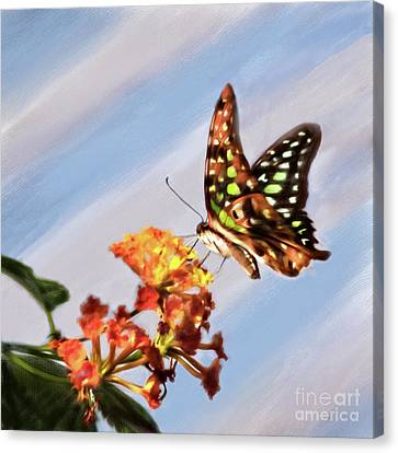 Tail Jay On Scarlet Milkweed Canvas Print