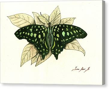 Tailed Jay Butterfly Canvas Print by Juan Bosco
