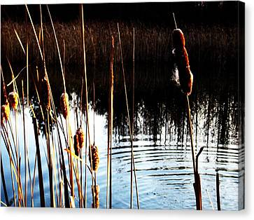 Tails Of Silver And Gold Canvas Print by Toni Jackson