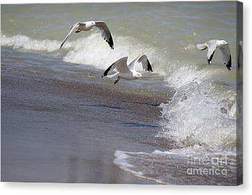 Take Flight Canvas Print by Jeannie Burleson