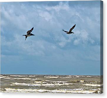 Canvas Print featuring the photograph Take Flight  by Ken Frischkorn