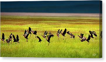 Ibis Canvas Print - Take Off by Leland D Howard