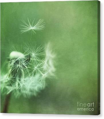 Take Off Canvas Print by Priska Wettstein