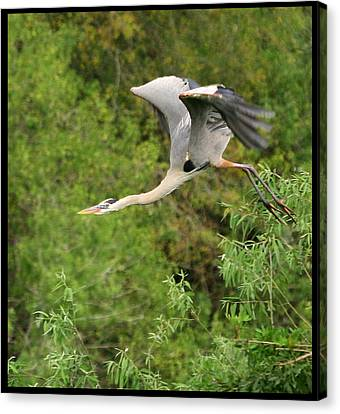 Canvas Print featuring the photograph Take Off by Shari Jardina
