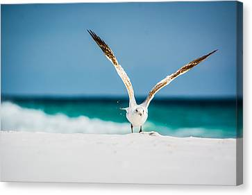 Take Off Canvas Print by Shelby  Young