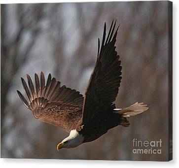 Taking Aim On Lunch Canvas Print by Robert Pearson