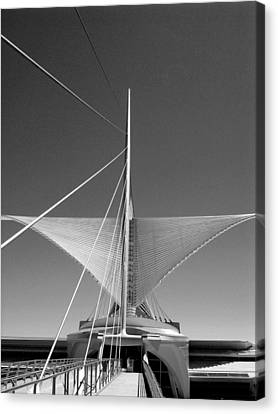 Taking Flight I Canvas Print by Steven Ainsworth