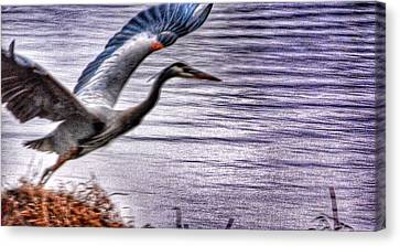 Canvas Print featuring the photograph Taking Flight by Sumoflam Photography