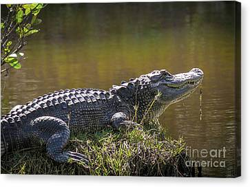 Taking In The Sun Canvas Print