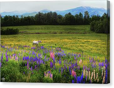 Canvas Print featuring the photograph Taking In The View by Wayne King