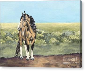 Takotda The Wild Mustang Stallion Canvas Print by Jordan Parker