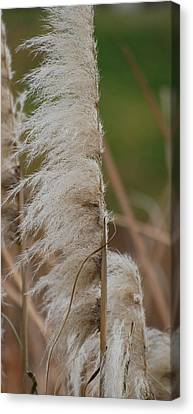 Tall And Proud Canvas Print by Jean Booth