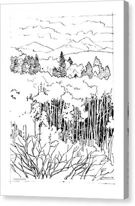 Tall Aspens Rocky Mountains Canvas Print