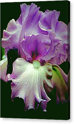 Canvas Print featuring the photograph Tall Bearded Iris In Lavender by Julie Palencia