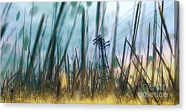 Tall Grass II Canvas Print by Carol Pietrantoni