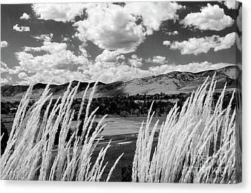 Tall Grass In The Foothills Canvas Print