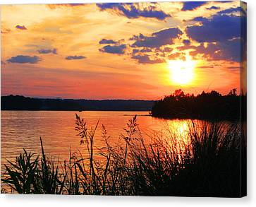 Tall Grass Sunset Smith Mountain Lake Canvas Print by The American Shutterbug Society