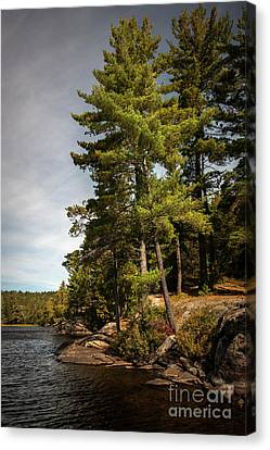 Canvas Print featuring the photograph Tall Pines On Lake Shore by Elena Elisseeva