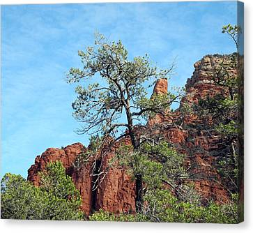 Canvas Print featuring the photograph Tall Trees And Rocky Spires by Lynda Lehmann