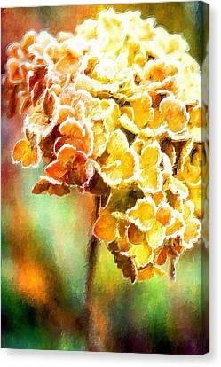 Tangerine Hydrangeas Canvas Print by Bonnie Bruno
