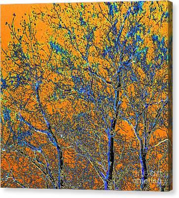 Tangerine Light Canvas Print by Ann Johndro-Collins