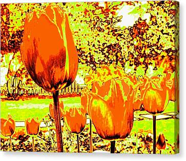 Tangerine Tulips Canvas Print by Will Borden