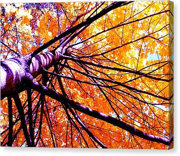 Tangled Canvas Print by Andrea  Darlington
