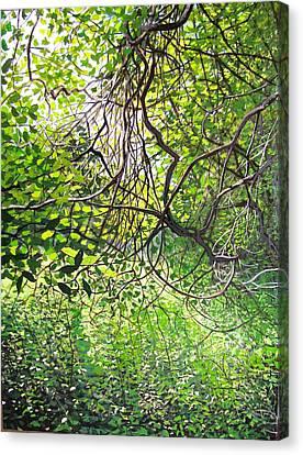 Tangled Embrace Canvas Print by David Bottini