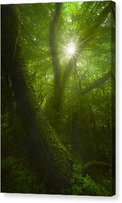 Tangled Canvas Print by Giovanni Allievi