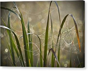 Tangled Highway Canvas Print by Carolyn Marshall