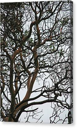 Tangled Web Tree Canvas Print by Carol  Eliassen