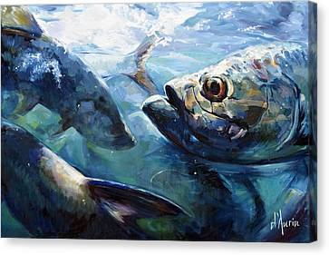 Tarpon Canvas Print by Tom Dauria