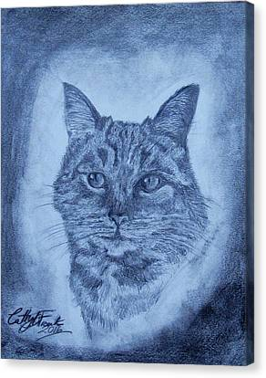Tarzan The Cat Canvas Print by Caterina Frank