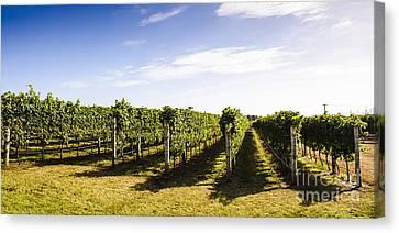 Tasmania Winery Landscape Canvas Print